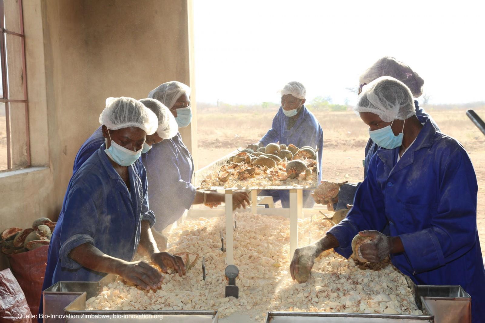 Baobab-fruit-powder-extraction