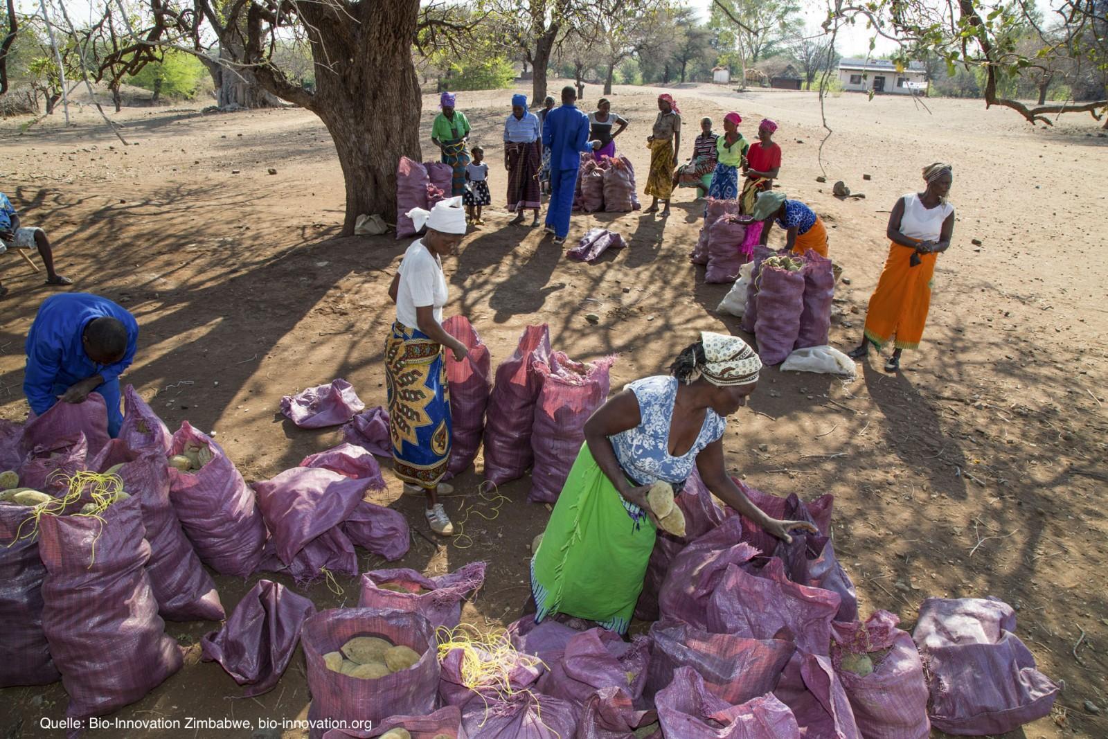 Baobab-selling